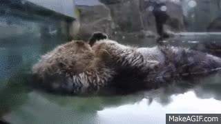Watch sleeping beaver GIF on Gfycat. Discover more related GIFs on Gfycat