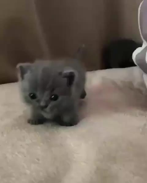 """cat, kitten, tag2, testtag2, Lovely Cats on Instagram: """"So tiny and cute😻 . . . . #bestmeow#cat_features #catlife #catlovers #catmeme#catmemes #catsofig #catsofworld #c GIFs"""