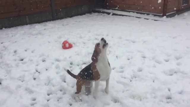 Watch and share Dogtraining GIFs and Funnyvideos GIFs on Gfycat