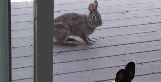 Watch 03-wild-rabbit-house-bunny-love-gif GIF on Gfycat. Discover more related GIFs on Gfycat