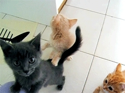 animal, animals, cat, cat gif, cats, caturday, funny, funny gif, funny gifs, kitten, kitten gif, kittens, lol, meow, wtf, Meow! GIFs