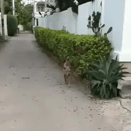 Watch and share Cachorro GIFs and Animal GIFs by Império do riso on Gfycat