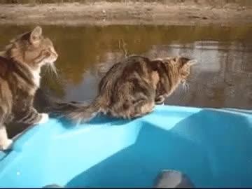 Watch GiantPiercingAgouti GIF on Gfycat. Discover more mypeopleneedme GIFs on Gfycat