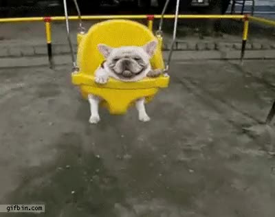 Watch and share Bulldog In Swing GIFs on Gfycat