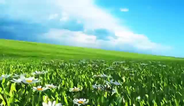 daisy, flower, flowers, Green Screen Flowery Meadow Daisies - Footage PixelBoom GIFs