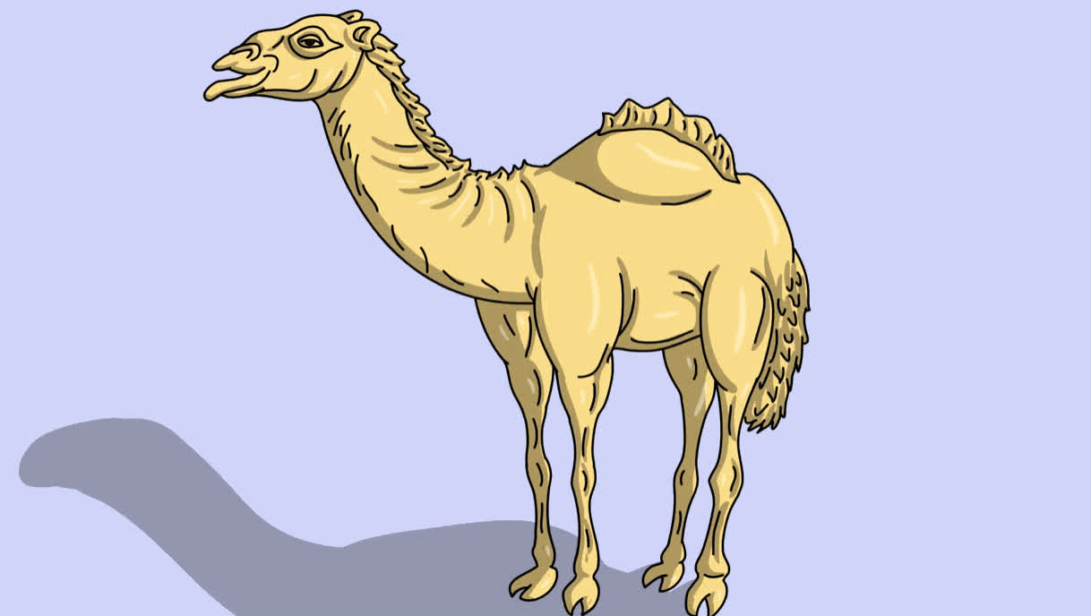 a, boring, camel, day, enjoy, excited, happy, have, hump, humpday, look, middle, nice, of, the, turn, wednesday, week, yay, your, Hump day GIFs