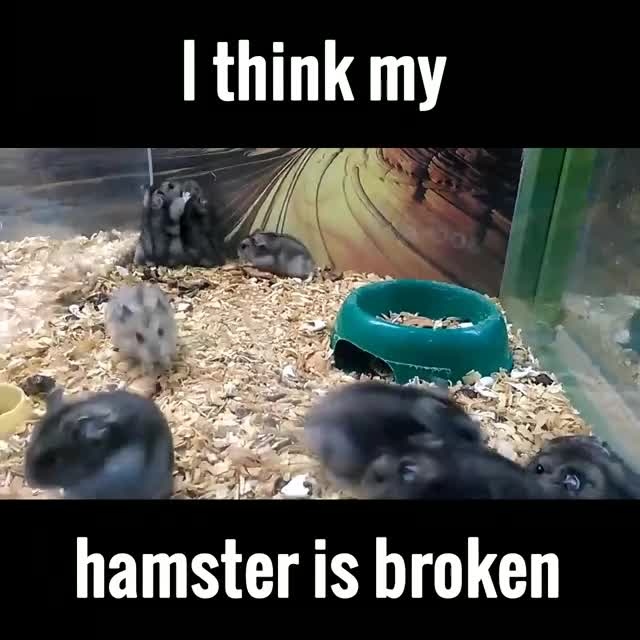 Watch I think my hamster is broken GIF by @benjaab123 on Gfycat. Discover more StoppedWorking, stoppedworking GIFs on Gfycat