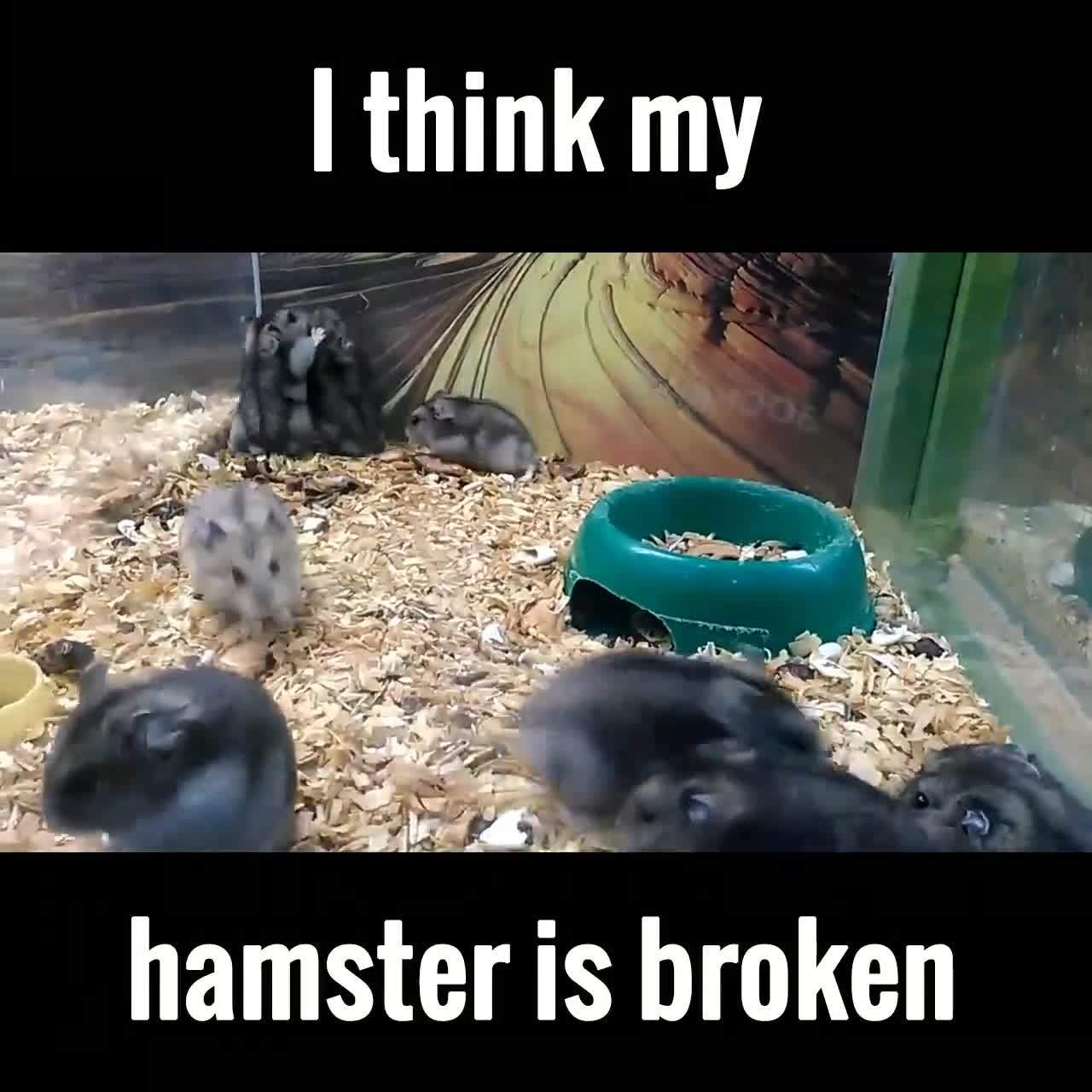 StoppedWorking, stoppedworking, I think my hamster is broken GIFs