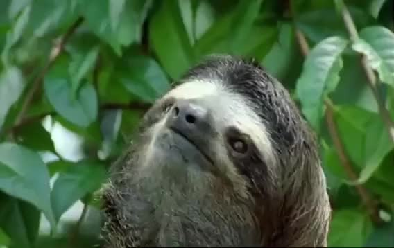 Watch this tired GIF by The GIF Forge (@leahstark) on Gfycat. Discover more Nap, Sleepy, Sloth, Tired, Zzz GIFs on Gfycat