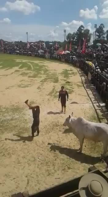 Watch and share Bullfight GIFs and Awesome GIFs by drunkestdrunk on Gfycat