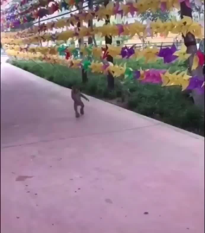Monkey rollerblading GIFs