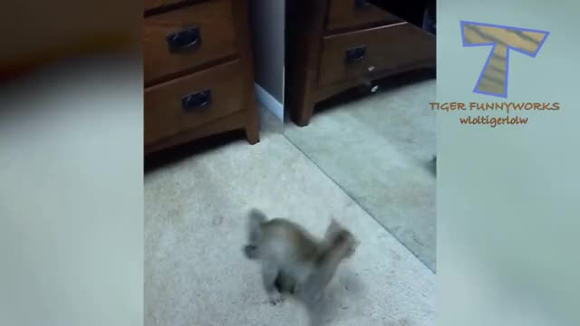 Watch CATS GIF on Gfycat. Discover more All Tags, Compilation, Dog, animal, animals, best, challenge, funniest, funny, kitten, laugh, laughing, not, pet, pets, play, puppy, scared, sleep, try GIFs on Gfycat