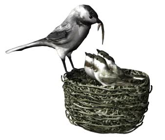 Watch and share Mom Bird Feeding Babies From AnimateIt.net GIFs on Gfycat