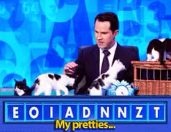 Watch and share Jimmy Carr GIFs and Cats GIFs on Gfycat