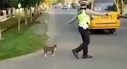 Hooman helped catto pass the road - gif