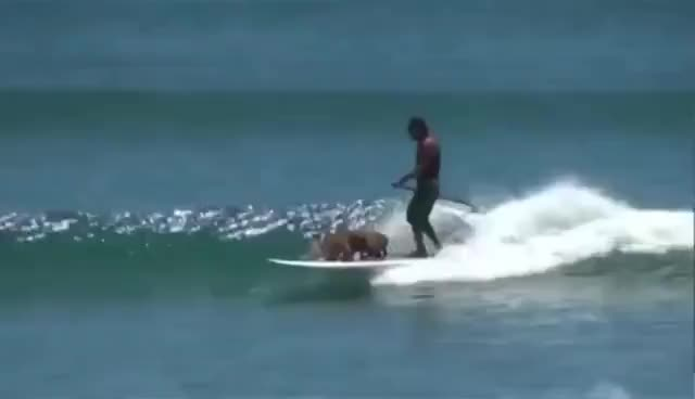 Watch and share Tillman The Surfing And Skateboarding Dog Dies GIFs on Gfycat