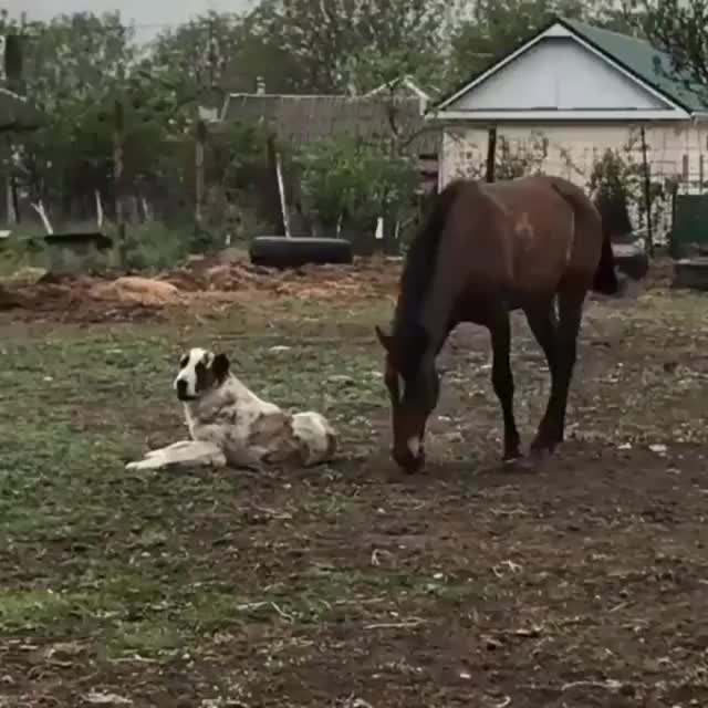 Watch and share Beautiful Friendship - Imgur GIFs on Gfycat