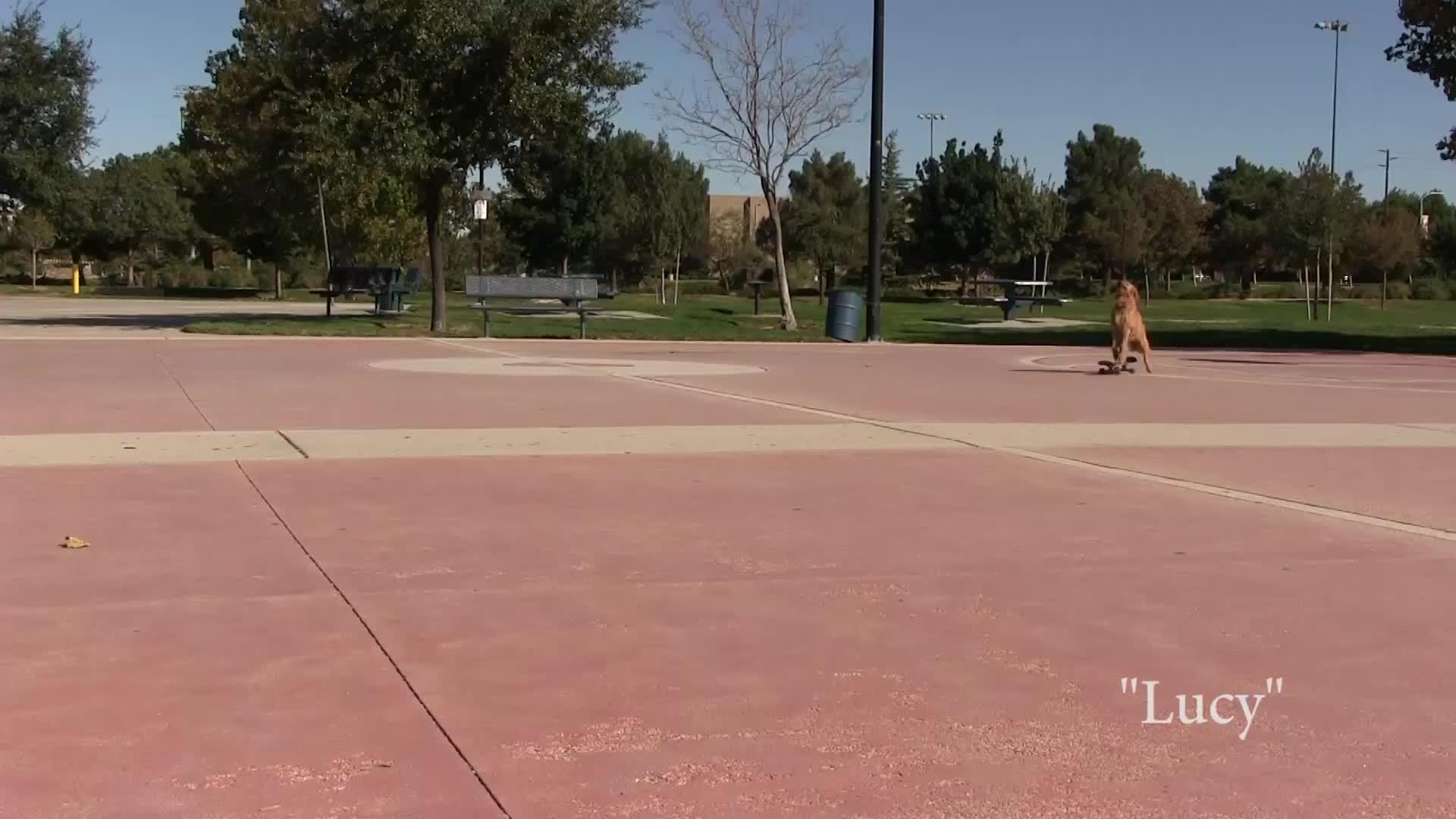 Lucy skateboarding GIFs