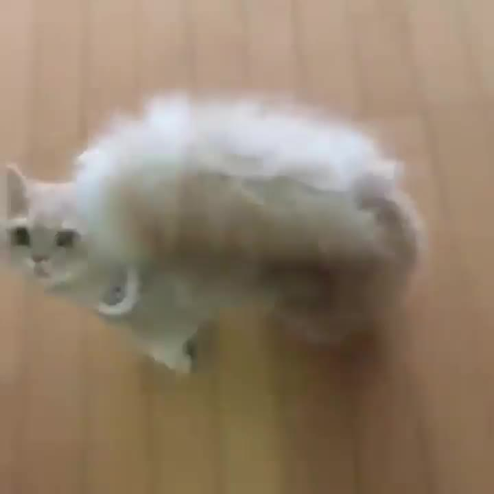 This cat looks like it's part squirrel GIFs