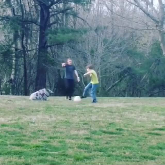 Watch and share Pigs Playing Soccer GIFs and Animals Playing GIFs by lnfinity on Gfycat