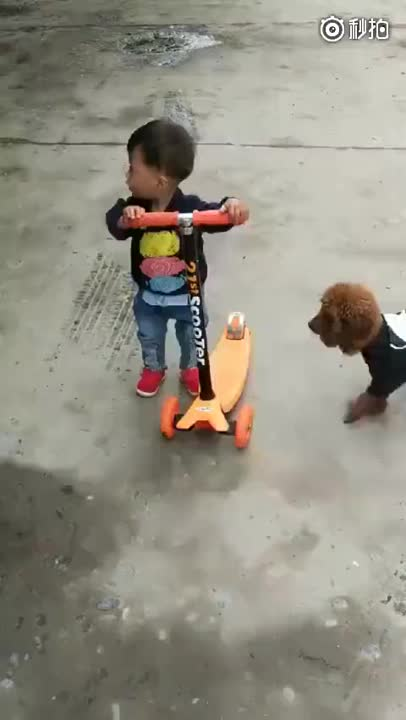 child tries to ride scooter, dog rides a scooter, kid, qz76sy7xogq11, So easy a dog could do it GIFs