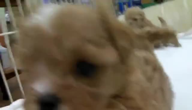 Puppies, Puppies GIFs