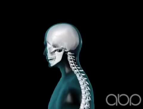 Watch Neck Movement - 3D Medical Animation || ABP © GIF on Gfycat. Discover more related GIFs on Gfycat