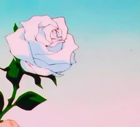 flower, flowers, for, gentle, give, love, offer, rose, white, you, Offer a rose GIFs