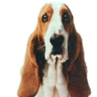 Watch and share Basset Wagging GIFs on Gfycat