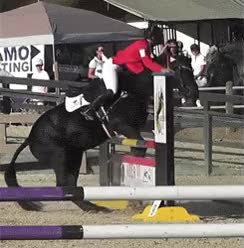 Watch and share Equitation, Saut D Obstacles, Cheval, Animal, Tomber GIFs on Gfycat
