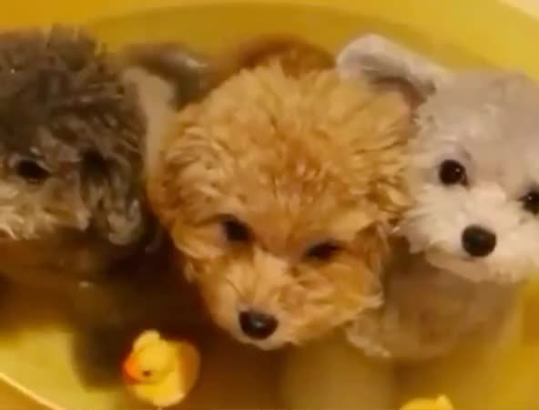 aw, aww, awww, bath, brothers, cute, cuteness, cutiepie, dog, look, pet, puppies, puppy, sweet, together, water, Awww GIFs