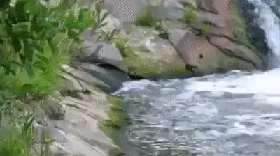 Watch and share Гифки-змеи-рыбалка-живность-5627503 GIFs by giho13 on Gfycat