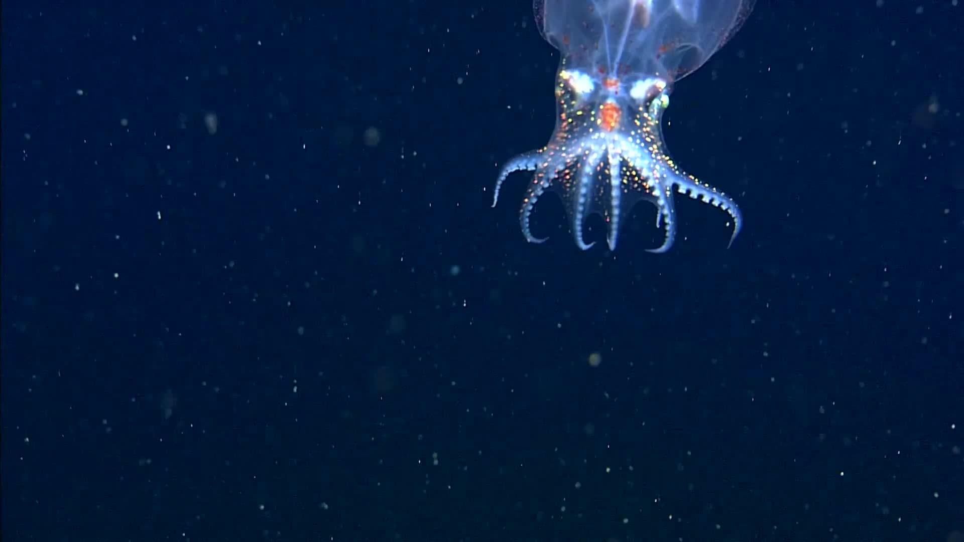 blue planet, our planet, transparent sea creature GIFs