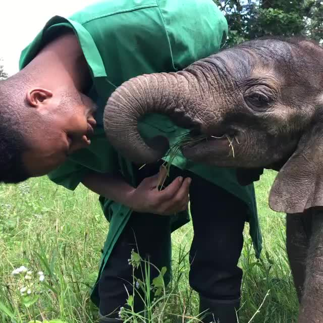 Watch and share Kilimanjaro Animal Center For Rescue, Education And Wildlife GIFs by b12ftw on Gfycat