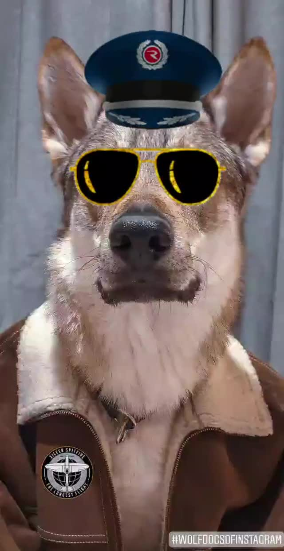 Watch and share Hero GIFs by Pranko The Wolfdog  on Gfycat