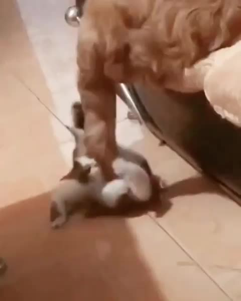 Cat brings its own fate down upon itself GIFs