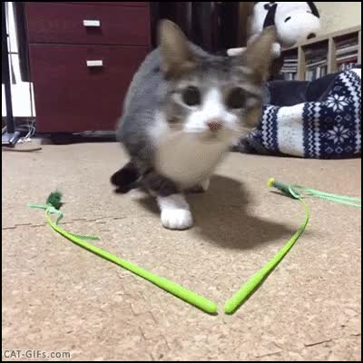 Watch and share CAT Funny Wiggle Wiggle And Then Pouncing Cat Is Flying GIFs on Gfycat