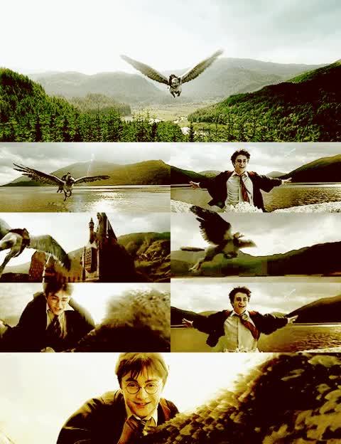 Watch and share Taki Gif :P Na Harry Potter - Zszywka.pl GIFs on Gfycat