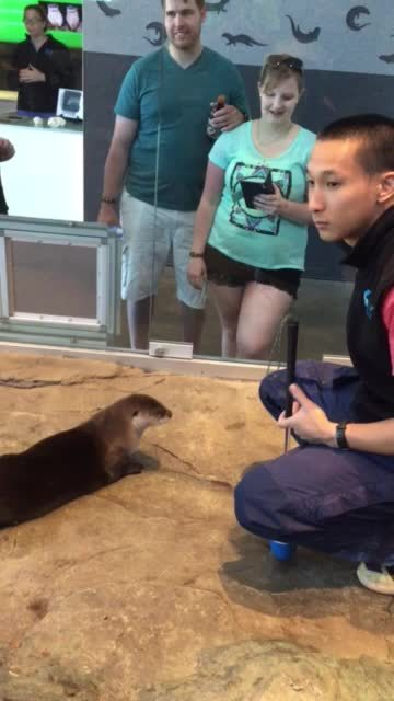 GifsofOtters, gifsofotters, Double hop GIFs