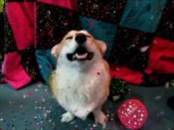 celebrate, celebration, confetti, cute, dog, excited, happy, happy new year, new, nye, party, pet, puppy, year, Happy New Year! GIFs
