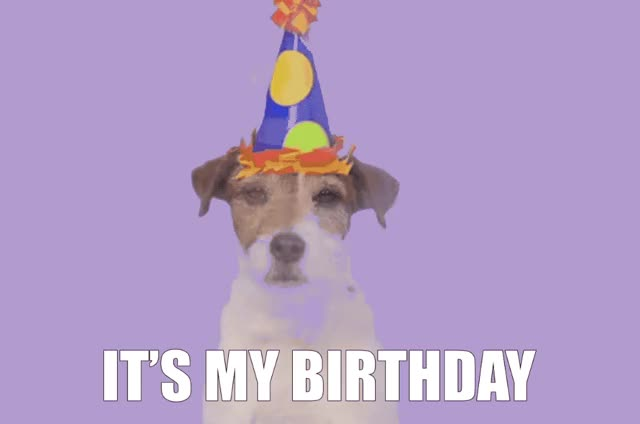 Watch this birthday GIF by GIF Queen (@ioanna) on Gfycat. Discover more animal, bday, birthday, celebrate, celebrating, cute, dog, excited, exciting, funny, happy, happy birthday, hat, it's, lol, my, party, puppy, woof GIFs on Gfycat