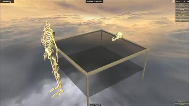 Watch and share Skeleton GIFs and Wog GIFs on Gfycat
