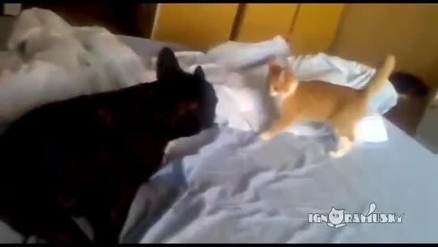 hitmanimals, Cat Assassin (Коварный Котенок) (reddit) GIFs