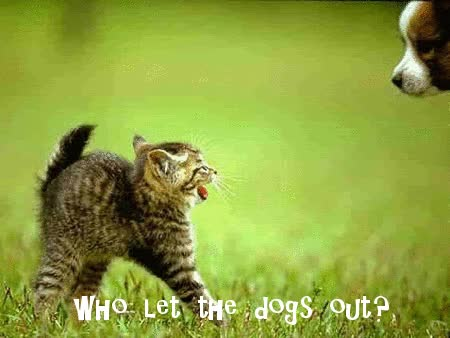 Watch Who let the dogs out GIF on Gfycat. Discover more related GIFs on Gfycat