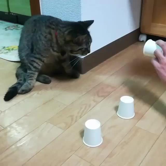 Video by nyakku_kun GIFs