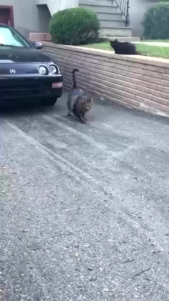 Watch this absolute unit GIF on Gfycat. Discover more absolute unit, cat GIFs on Gfycat