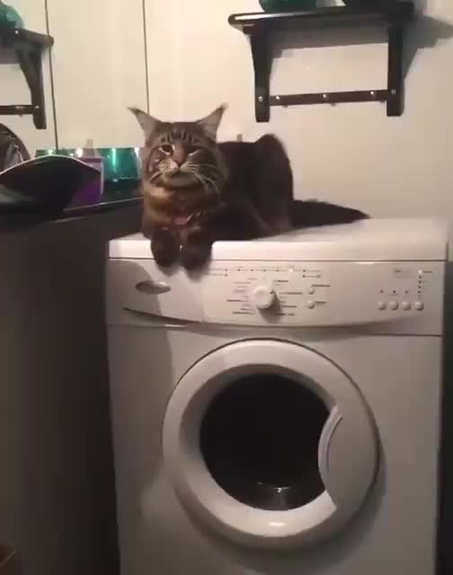 Watch and share Aww GIFs and Cat GIFs by GB on Gfycat