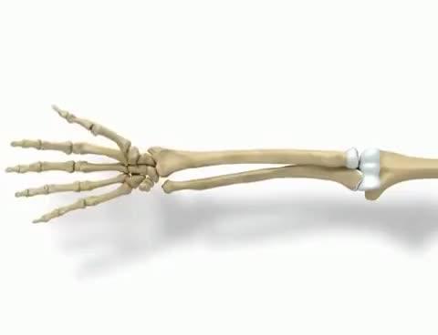 forearm motion : pronation & supination   Find, Make & Share Gfycat GIFs
