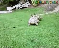 Watch Random Weas GIF on Gfycat. Discover more Amistad, Animales, Animals, Ayuda, Friendship, Help, Reptiles, Tortoise, Tortugas, el.nakamori GIFs on Gfycat
