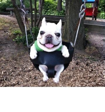 splitdepthgifs, Dog Swinging GIFs